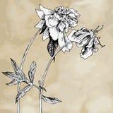 葡萄酒花卉构成 库存照片