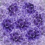 葡萄酒花卉紫色美好的背景 背景构成旋花植物空白花的郁金香 花花束从紫罗兰色玫瑰的 特写镜头 免版税库存照片