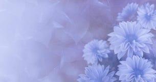 葡萄酒花卉青紫罗兰色美好的背景 黄色开花大丽花 库存照片