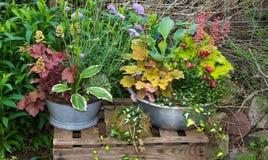 葡萄酒花盆的几棵多年生植物植物 免版税库存照片