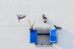葡萄酒蓝色窗口和鸟 免版税库存图片