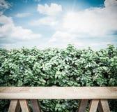 葡萄酒过滤器:在绿色树篱和蓝天的木长凳与sunbu 库存照片