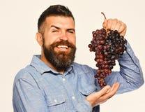 葡萄酒酿造和秋天概念 有愉快的面孔的种葡萄并酿酒的人 免版税库存照片
