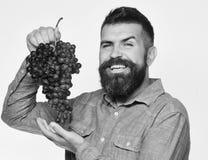 葡萄酒酿造和秋天概念 有愉快的面孔的种葡萄并酿酒的人 免版税库存图片