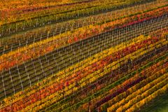 葡萄酒酿造在欧洲 葡萄园几何上被找出的多彩多姿的秋天行  与秋天五颜六色的藤的抽象背景 库存照片