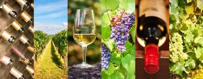 葡萄酒酿造学和酒全景照片拼贴画,酒概念 免版税库存照片