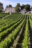 葡萄酒酿造-葡萄园在多尔多涅省-法国 库存照片