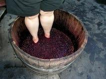 葡萄酒酿造 库存图片