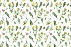 葡萄酒野花 与油被绘的香苜蓿的无缝的样式 免版税库存图片