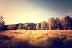 葡萄酒金子晴朗的秋天在森林和领域里 库存照片