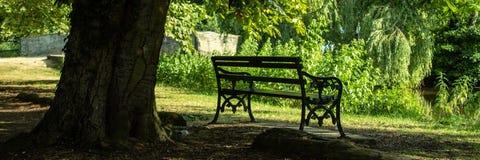 葡萄酒长凳在树下 免版税库存图片
