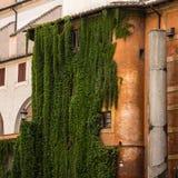 葡萄酒门面长满与常春藤 免版税库存图片