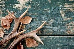 葡萄酒雄鹿鹿角和叶子在木材 免版税库存图片