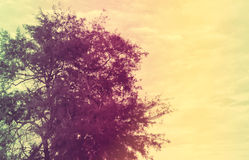 葡萄酒颜色树 库存照片