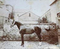 葡萄酒黑白照片陈列马在后院-维多利亚女王时代? 库存照片
