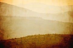 葡萄酒绵羊风景 库存照片