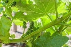 葡萄酒2015年 免版税库存图片