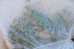 葡萄防护春天霜 库存图片