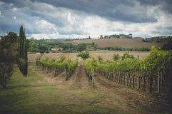 葡萄领域在托斯卡纳,意大利 免版税库存照片