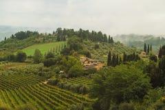 葡萄领域在托斯卡纳,意大利 库存照片