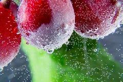 葡萄水起泡绿色叶子黑暗的背景宏指令 免版税图库摄影