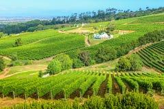 葡萄wineland乡下 免版税库存图片