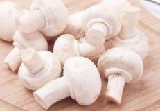 董事会采蘑菇木 免版税库存图片