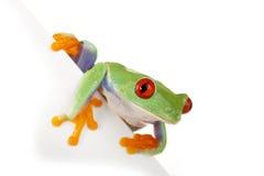 董事会青蛙白色 库存照片