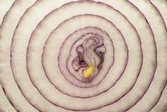 紫洋葱切片纹理 免版税库存图片