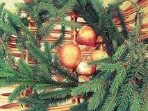 葱和冷杉木 免版税库存照片