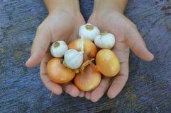 葱和大蒜食物 图库摄影