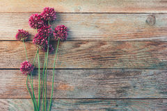 葱属野花在木葡萄酒背景的 库存照片