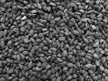 葱种子 免版税图库摄影
