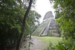 蒂卡尔的暗藏的寺庙 库存图片