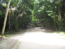蒂卡尔,贝登省,危地马拉,中美洲21 免版税库存照片