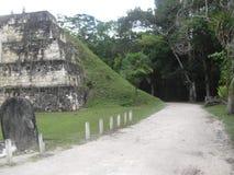 蒂卡尔,贝登省,危地马拉,中美洲18 免版税库存图片
