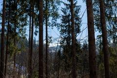 蒂罗尔州基希贝格,提洛尔/奥地利- 2019年3月24日:看法通过奥地利山的森林 库存图片
