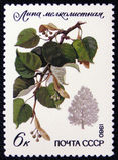 蒂耶椴树属cordata,系列`保护了树和灌木`,大约1980年 免版税库存照片
