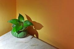 蒋酱之叶在小罐的叶子绿色 图库摄影