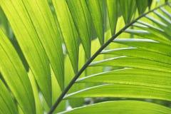 蒋酱之叶棕榈叶匍匐和美好的绿色离开na心情  免版税库存图片