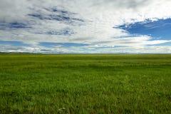 蒙古干草原, Uvurkhangai省,蒙古 库存照片