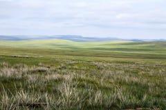 蒙古干草原 免版税库存图片