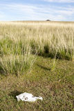 蒙古草原和马头骨 免版税库存图片
