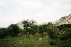 蒙古风景:有沙子树和山的隔壁滩 免版税库存照片