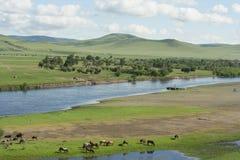 蒙古马和母牛 免版税库存照片