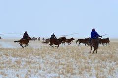 蒙古马和车手 图库摄影