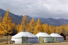蒙古 库存照片