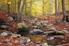 蒙塞尼自然公园,西班牙小河和风景  免版税图库摄影