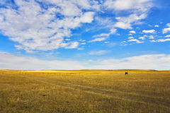 蒙大拿天空 免版税图库摄影