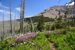 蒙大拿高国家 图库摄影